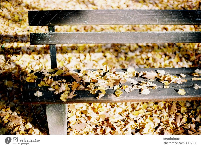 Seventy-three years Autumn Sun Moody Light Physics Leaf Tree Stay Park Park bench Loneliness Seasons Garden Transience Warmth End Offense Death Bench Relaxation