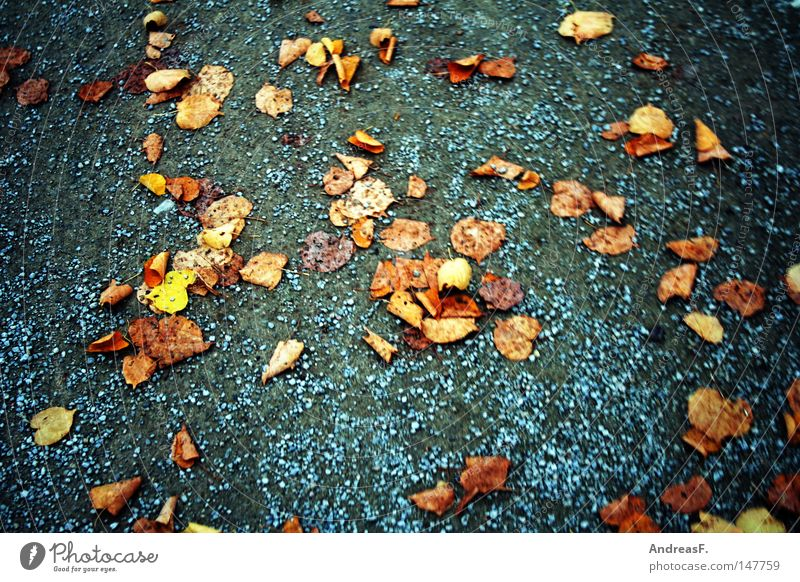 Leaf Autumn Lanes & trails Sand Going Walking To go for a walk To fall Footpath Traffic infrastructure Autumn leaves Gravel Autumnal November Jogging Vertigo
