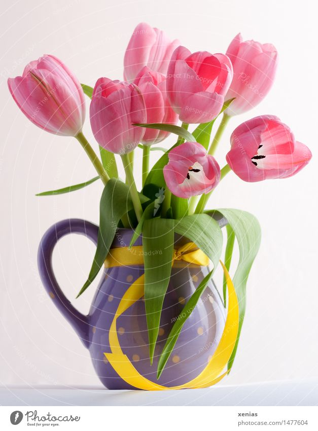 Pink tulips in violet vase with yellow ribbon Vase Tulip Bouquet Valentine's Day Mother's Day Easter Birthday Spring Yellow Green Violet