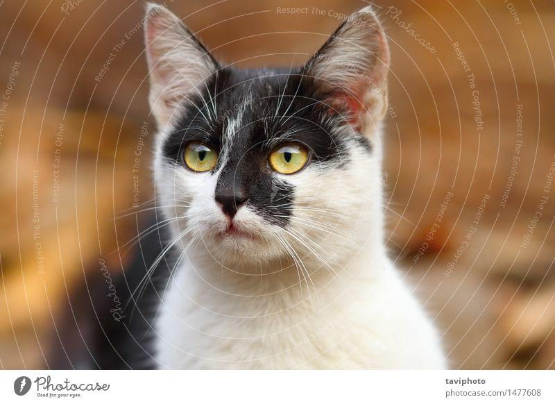 cute mottled cat Cat Woman Beautiful White Animal Black Face Adults Natural Hair Cute Pet Delightful Mammal Striped Strange