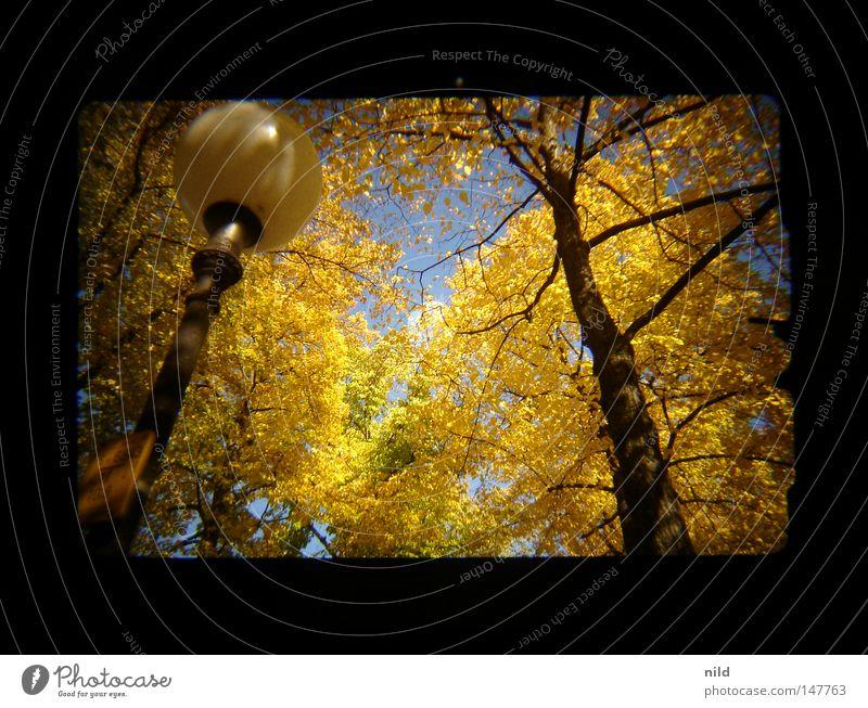 Analog-Digital (Aufm weg zur Wiesn) Autumn Footpath Lantern Yellow Multicoloured Happiness Sky blue Theresienwiese Viewfinder Blue Gold Contrast