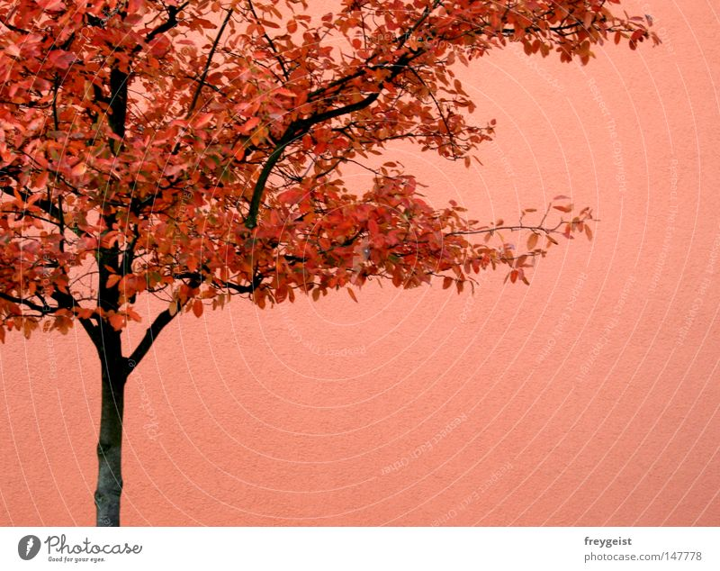 Tree Red Leaf House (Residential Structure) Wall (building) Autumn Bright Pink Orange Relationship Monochrome