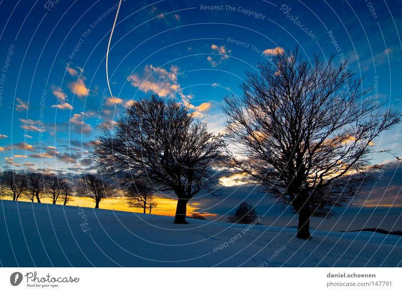 new christmas card 5 Sunset Winter Snow Black Forest White Deep snow Hiking Leisure and hobbies Vacation & Travel Background picture Tree Snowscape Nature Blue