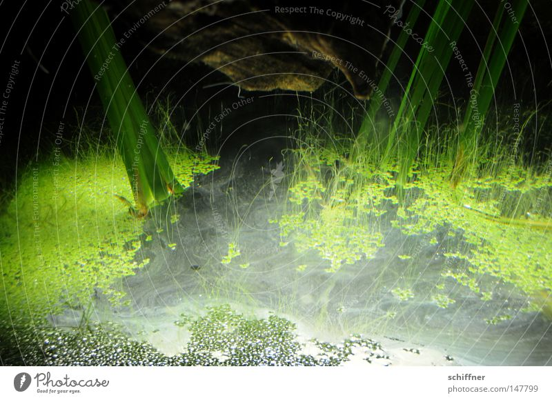 KAPUT - and in the end there was light Aquarium Algae Aquatic plant Foliage plant Light Shadow Surface of water Worm's-eye view Suction Background picture Green