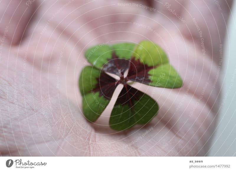 give luck Lifestyle Design Joy Happy Healthy Wellness Harmonious Birthday Nature Plant Leaf Cloverleaf Four-leafed clover Four-leaved Sign To hold on Esthetic
