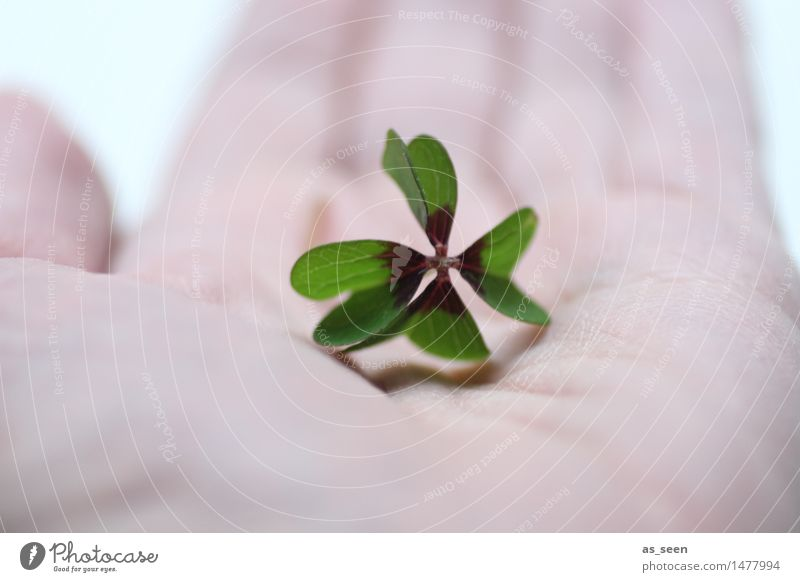 lucky charm Lifestyle Design Happy Healthy Wellness Harmonious Nature Leaf Good luck charm Four-leafed clover Clover Cloverleaf Souvenir Sign Touch To hold on