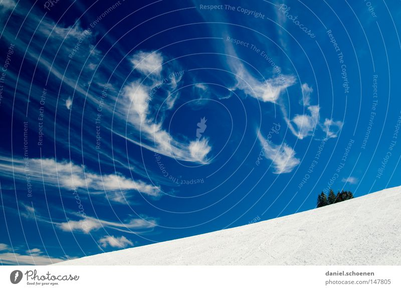 35 degrees cloudless! Winter Snow Clouds Cirrus Black Forest White Deep snow Leisure and hobbies Vacation & Travel Background picture Tree Snowscape Nature Blue