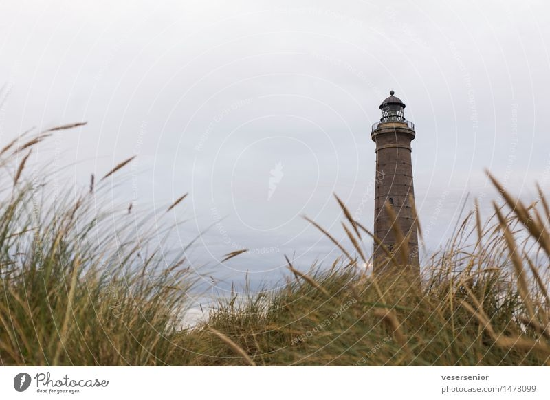 Lighthouse Skagen Fyr Vacation & Travel Landscape Grass Coast North Sea Navigation Old Illuminate Historic Tall Uniqueness Maritime Round Emotions Safety