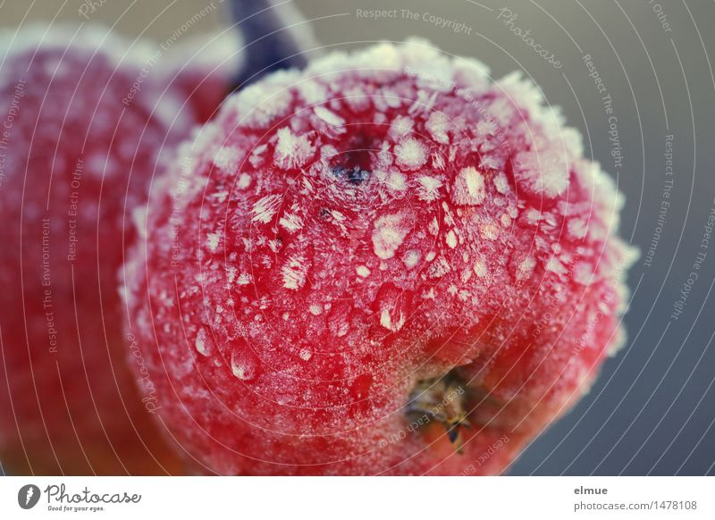 fresh fruit Winter Ice Frost Apple Tree of knowledge Awareness frostbite Vitamin C Vitamin-rich Spherical Freeze Healthy Cold Delicious Natural Round Juicy Red