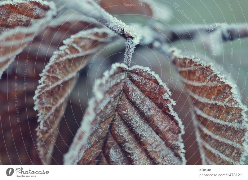 Cold Brown Together Design Dream Ice Creativity Transience Hope Frost Network Longing Fear of the future Surprise Brave Fatigue