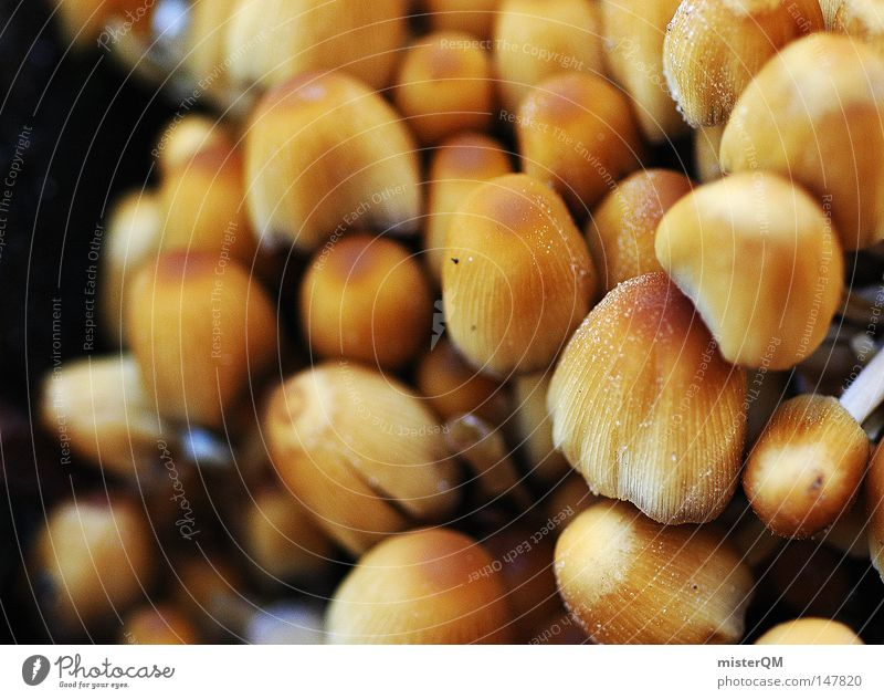 Nature Nutrition Food Autumn Small Brown Background picture Multiple Hiking Wet Growth Trip Perspective Many Near Gastronomy