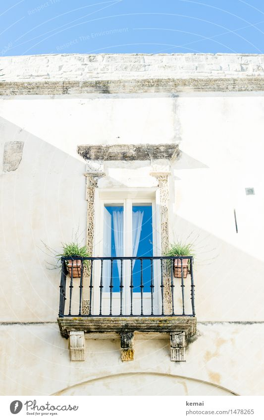 neat Curtain Cloudless sky Summer Beautiful weather Pot plant monopoly Apulia Italy Small Town Old town House (Residential Structure) Building Wall (barrier)