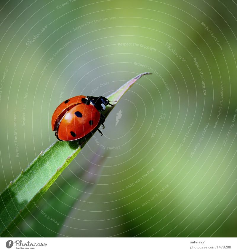 Start of happiness? Environment Nature Plant Animal Spring Summer Leaf Beetle Wing Seven-spot ladybird Insect Ladybird Good luck charm Happy 1 Crawl Small Above