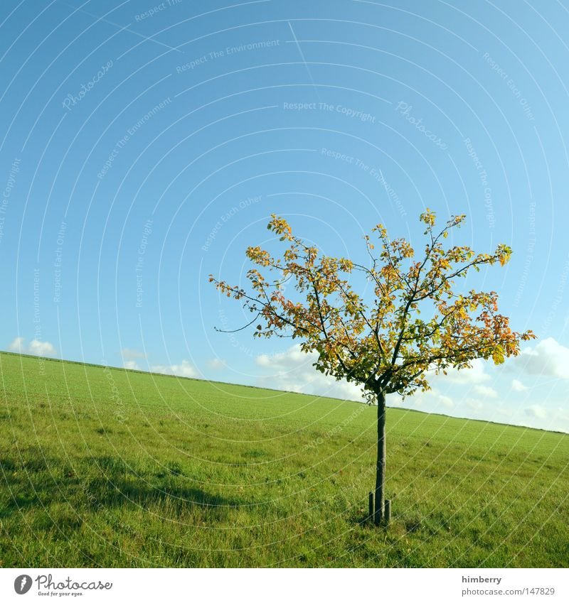 Sky Nature Tree Loneliness Clouds Landscape Meadow Autumn Grass Germany Background picture Weather Fruit Field Large Hope