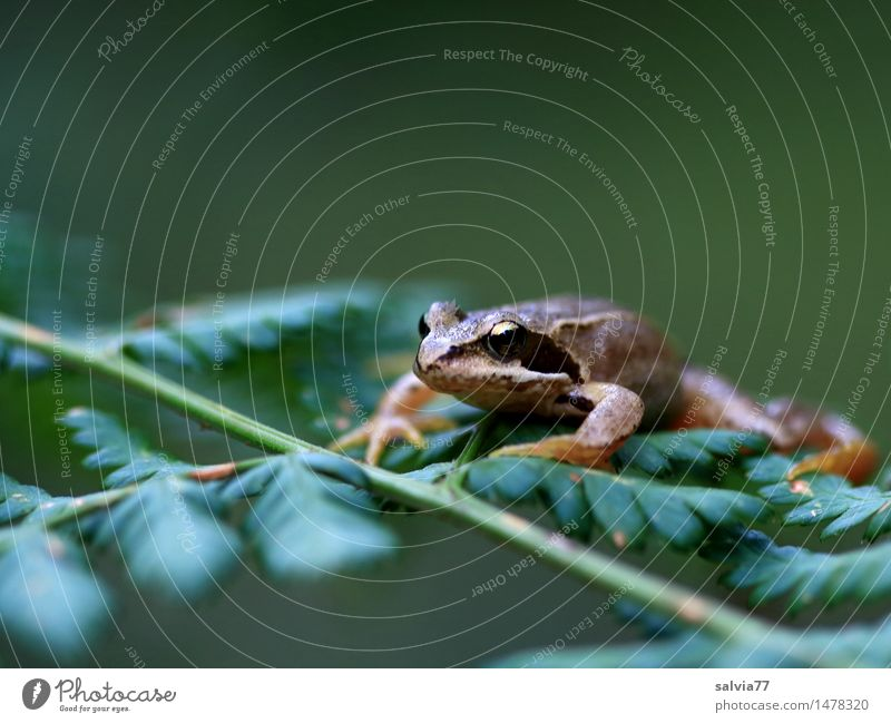 keep the overview Environment Nature Plant Animal Fern Leaf Foliage plant Forest Wild animal Frog Grass frog Amphibian 1 Observe Sit Wait Brown Green Serene