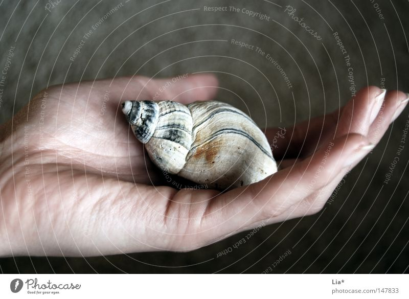 feeling Hand Fingers Nature Snail Mussel Touch To hold on Carrying Authentic Small Truth Fear of the future Peace Contact Sustainability Feeble
