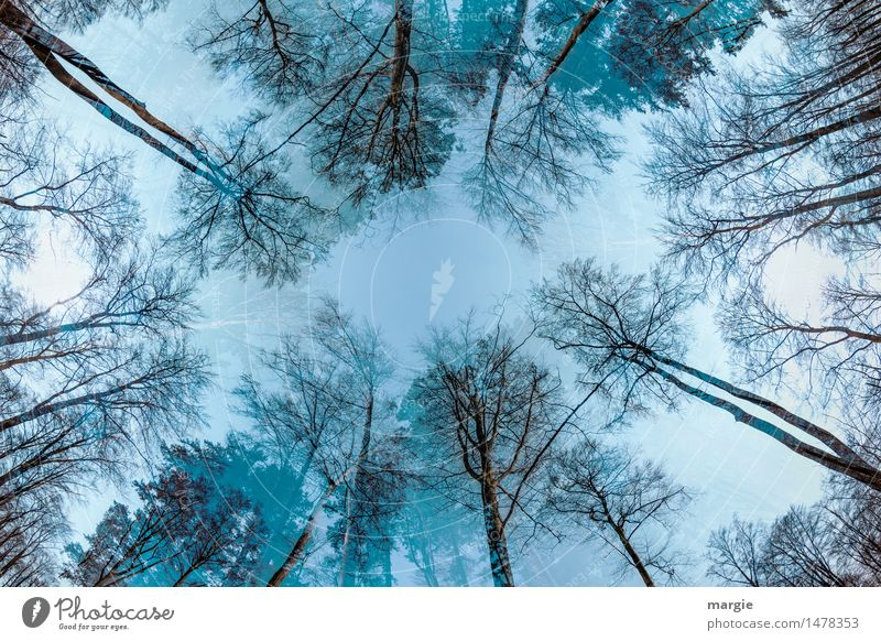 Huge trees rise to the sky Environment Nature Plant Animal Sky Autumn Winter Climate Weather Ice Frost Tree Leaf Foliage plant Agricultural crop Forest Wood