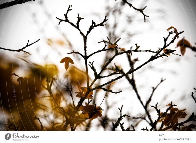 The End Autumn Leaf Tree Yellow Branch Past Transience