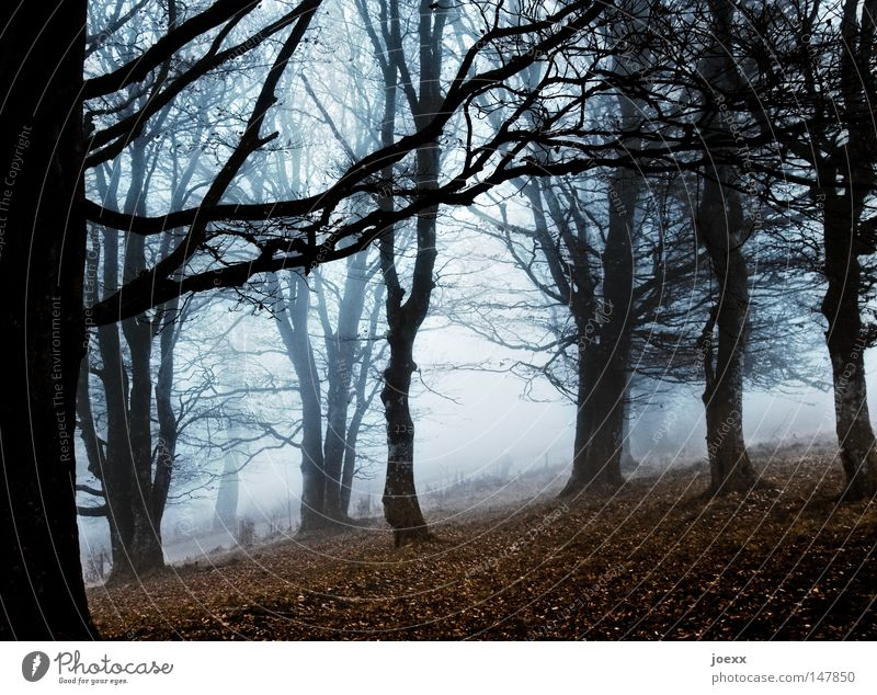 Creepy foggy Fear Branch Tree Tree trunk Leaf Ground Dark Loneliness Far-off places Autumn Autumnal colours Sense of Autumn Autumnal weather Cold Sparse