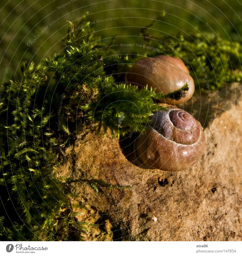 sunbathe in twos Snail Snail shell Meadow Animal Moss Stone creep away in the sun
