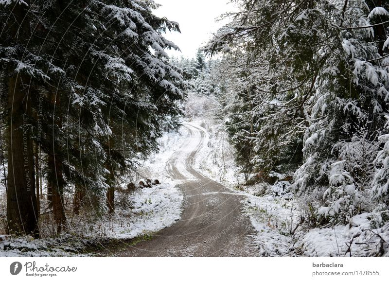 winter walk Nature Landscape Winter Climate Snow Forest Fir tree Black Forest Cold White Moody Relaxation Leisure and hobbies Horizon Idyll Calm Environment