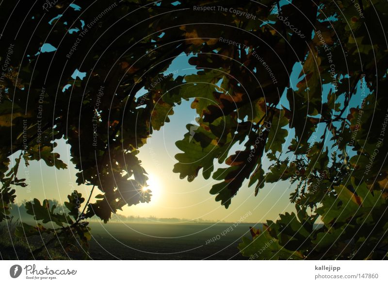 Nature Tree Sun Plant Red Leaf Autumn Meadow Lanes & trails Moody Field Fog Earth Star (Symbol) Growth Agriculture