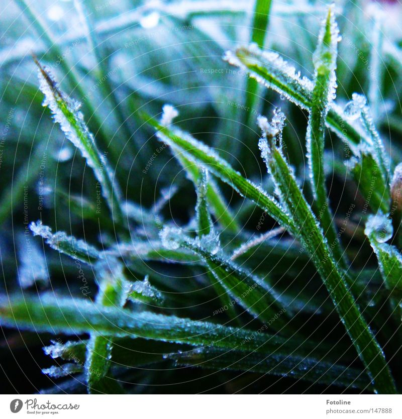 chilly times dawn Ice Frost Hoar frost Cold Snow Grass Lawn Grass surface Winter Autumn Dark Frozen Green White Earth Ground Plant Morning Sunrise Fog Meadow
