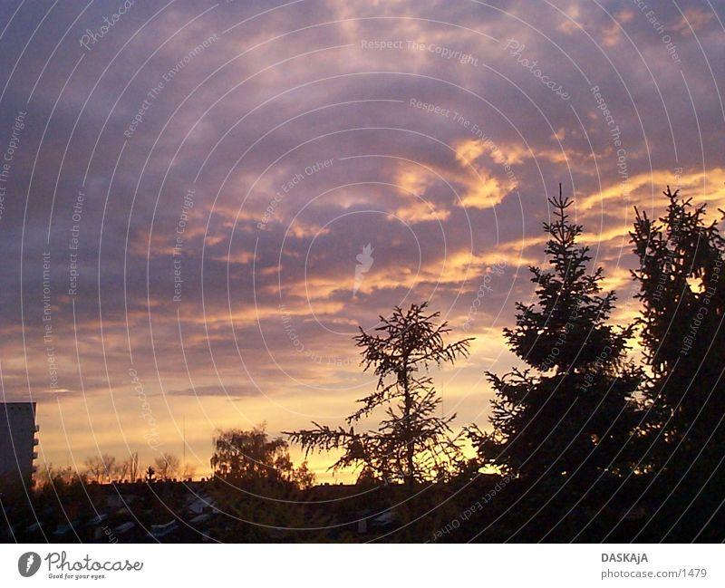 Autumn sunset 2 Fir tree Sun Cast Germany Sunset