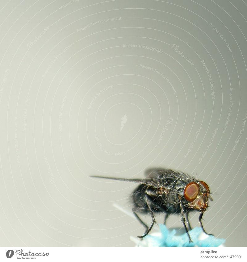 Calm Fly Sit Wing Copy Space Break Insect Obscure Pests Trunk Compound eye