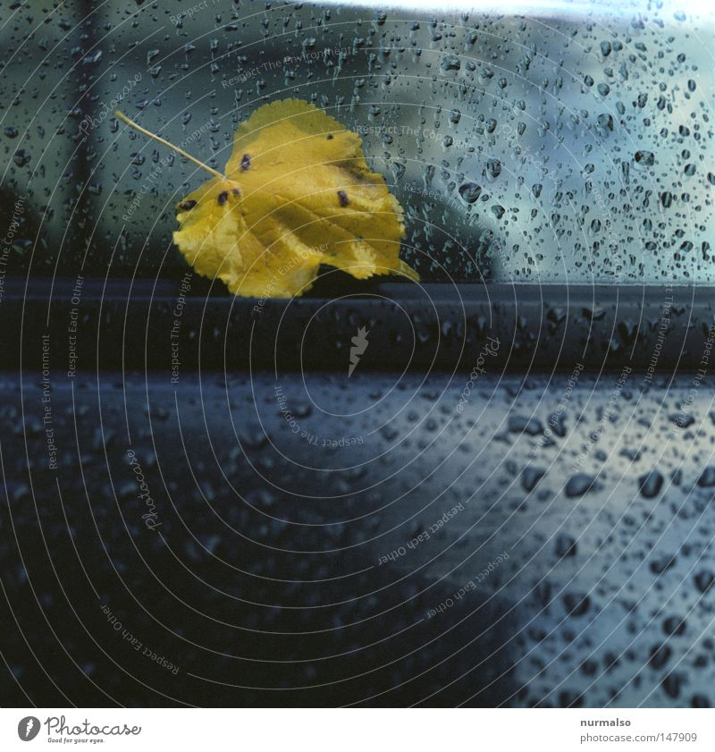 melancholy in major Leaf Motor vehicle Car Window pane Glass Rain Autumn Stick Multicoloured Wet Cold Carriage Old Glittering Rubber Water Year Seasons