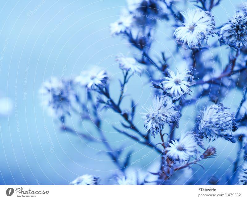 Nature Plant Blue Beautiful White Flower Winter Blossom Natural Garden Bright Park Fresh Esthetic