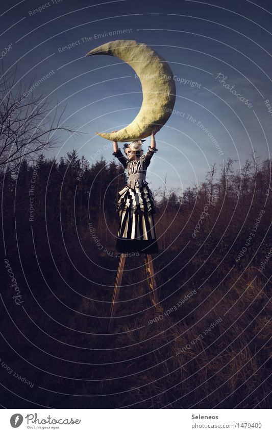 moonlight Human being Feminine Woman Adults 1 30 - 45 years Stage play Subculture Rockabilly Environment Nature Sky Moon Autumn Field Ladder Large papier mâché