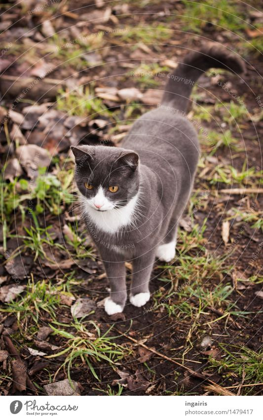 A Friendly Earth Grass Meadow Animal Pet Cat Domestic cat 1 Observe Looking Stand Friendliness Beautiful Curiosity Cute Brown Gray Green White Contentment Trust