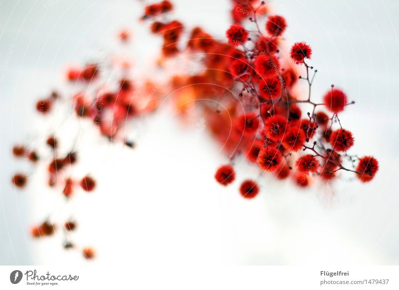 Nature Plant Red Warmth Life Blossom Movement Romance Soft Twig Bouquet Dynamics Smooth Dreamily