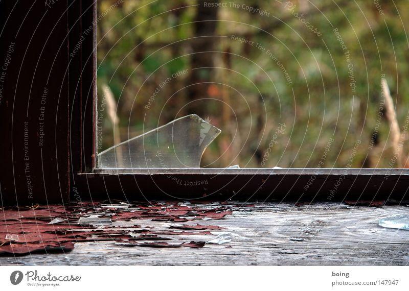 Window Garden Weather Dangerous Threat Transience Derelict Broken Window pane Thief Slice Criminality Safety Theft Shard Break-in