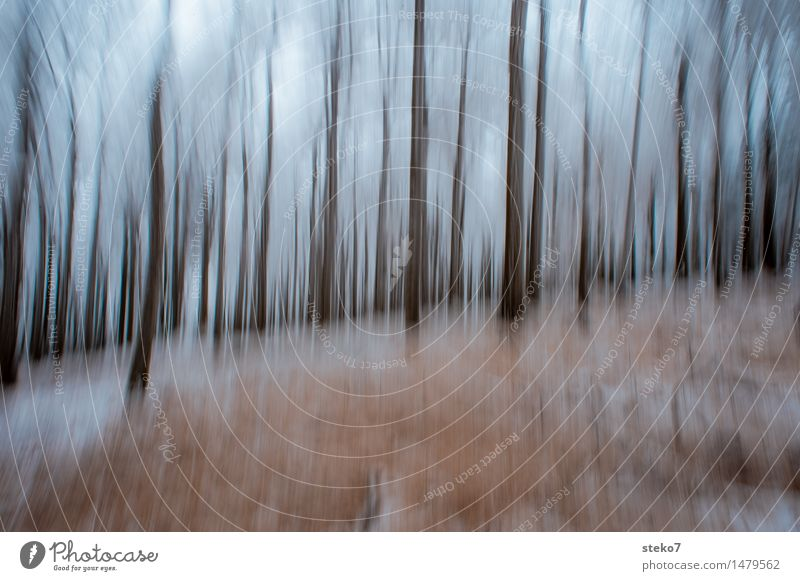 III Winter Tree Forest Loneliness Exhaustion Movement Creativity Surrealism Dream Tree trunk Structures and shapes Mystic Washed out Blur Discern Abstract