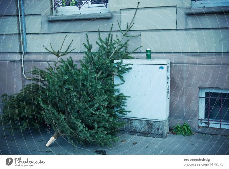 Oh fir tree ... Feasts & Celebrations Christmas & Advent Tree Fir tree Town House (Residential Structure) Building Wall (barrier) Wall (building) Window Old
