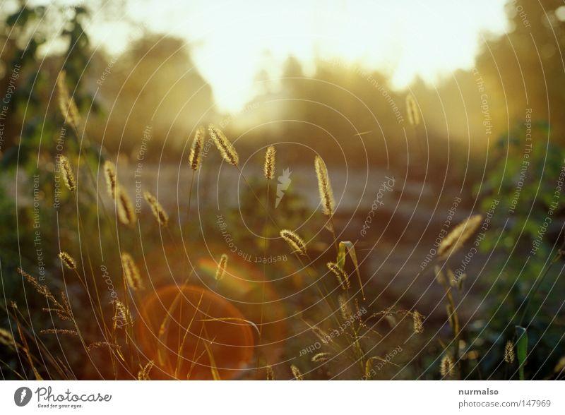 Beautiful Plant Sun Landscape Snow Autumn Lighting Moody Field Gold Glittering Fog Drops of water Living thing Agriculture To enjoy