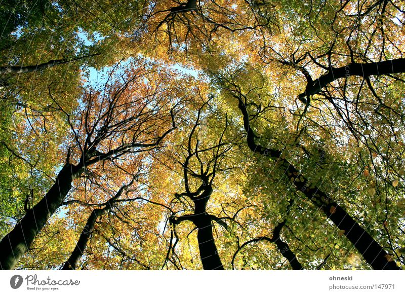 forest Multicoloured Mountain Nature Autumn Tree Leaf Forest Roof Fresh Blue Brown Yellow Green Tree trunk Branch To go for a walk Wiehen Mountains