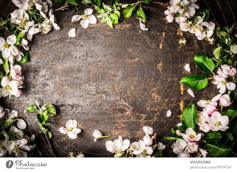 Tree blossoms on rustic background , Frame Style Design Decoration Table Nature Plant Spring Leaf Blossom Bouquet Wood Blossoming Pink Background picture