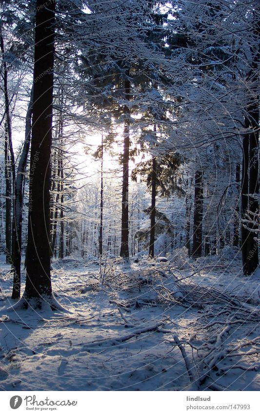 winter morning Winter Snow Forest Tree White Light Relaxation Calm