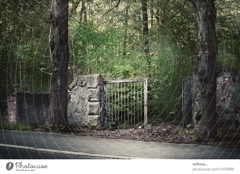 open woodland area Tree Park Forest Gate Main gate Entrance Rest of a wall Dark Creepy Decline Transience Feral Open Derelict Sidewalk Uninhabited Unkempt