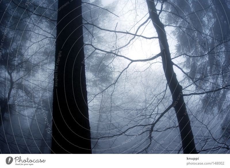 Nature Old Blue Tree Winter Calm Loneliness Black Forest Cold Dark Autumn Environment Trip Fog Large