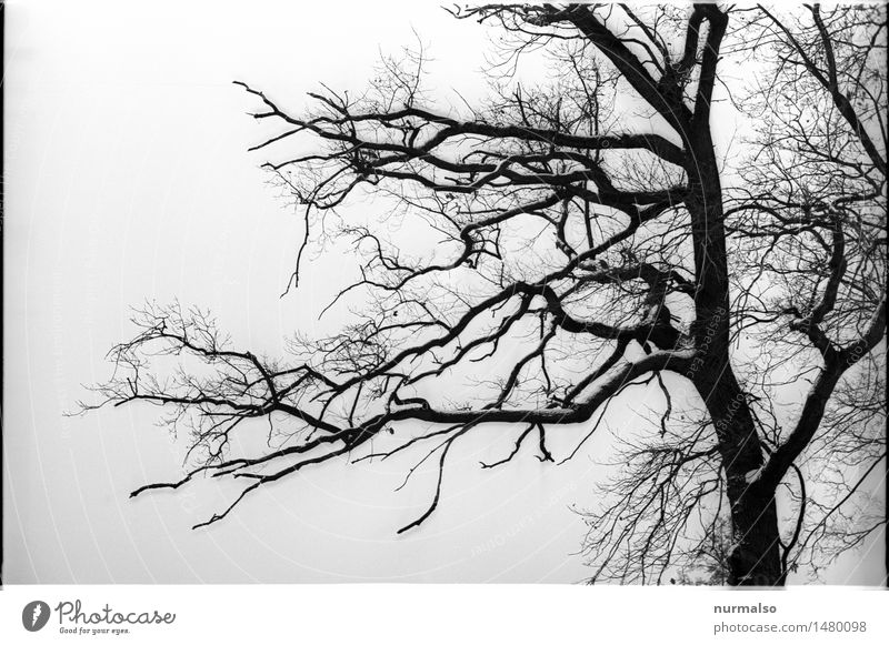 dark forest art nature eroticism winter a royalty free stock photo from photocase