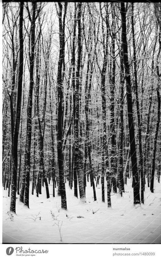 Nature White Tree Winter Dark Forest Black Cold Environment Snow Art Exceptional Moody Snowfall Dream Glittering