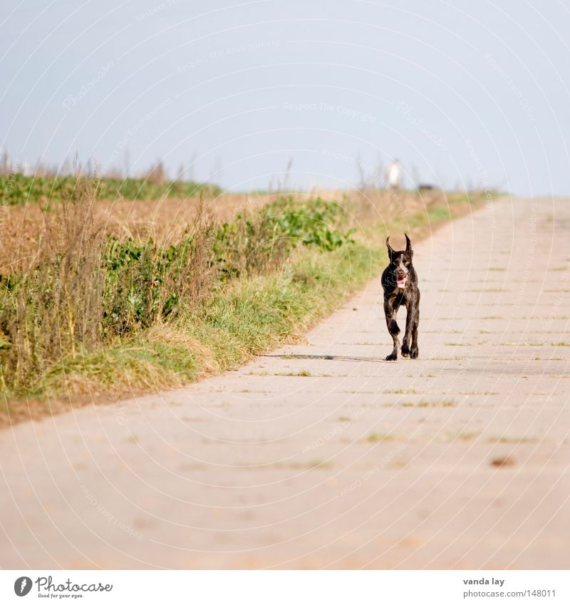 Sky Nature Animal Meadow Autumn Freedom Dog Lanes & trails Bright Brown Field Concrete Rope Running Speed