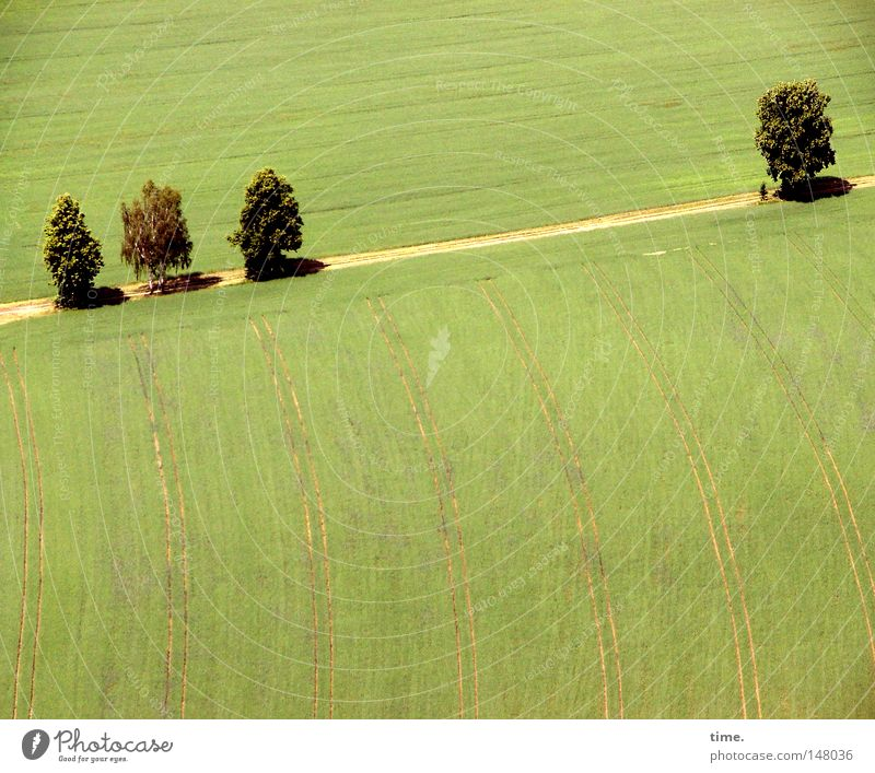 telling off Tree Field Lanes & trails Sandy path Parallel Colour photo Exterior shot Deserted Morning Shadow Bird's-eye view 4 Curved Green Footpath