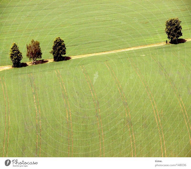 Tree Green Lanes & trails Field Bird's-eye view Footpath Parallel Curved Sandy path Saxon Switzerland