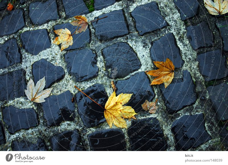 Leaf Black Yellow Street Dark Autumn Environment Gray Lanes & trails Stone Sadness Rain Weather Wet Lie Ground