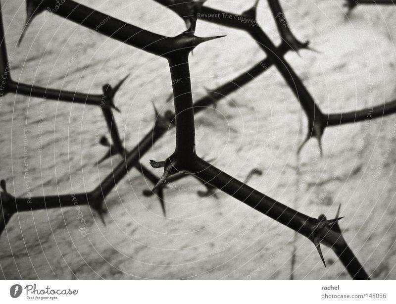 Plant Dark Dangerous Gloomy Point Branch Desert Dry Pain Exotic Shriveled Strange Thorny Thorn Thorn Prongs